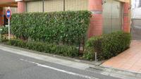 植木をスッキリ