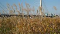 秋の多摩川