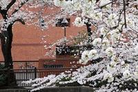 満開の桜と迎える春