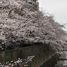 桜の開花と、家電展示販売